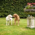 Ruby und Bertie