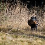 wild beechdales (4 von 9)