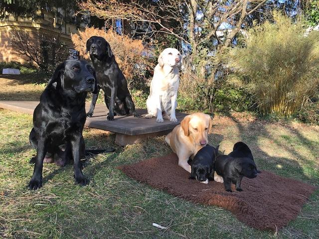 Kitty, Cash, Ruby, Piper und die Welpen