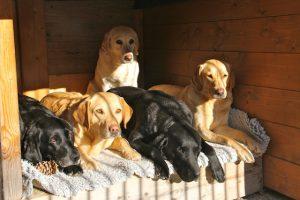 Die ganze Bande in der Sonne ;)
