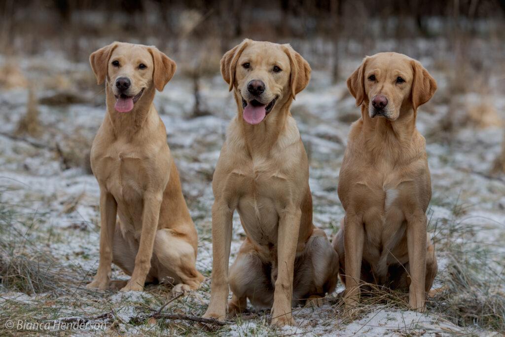 Piper mit ihren Kindern Nightingale & Newman